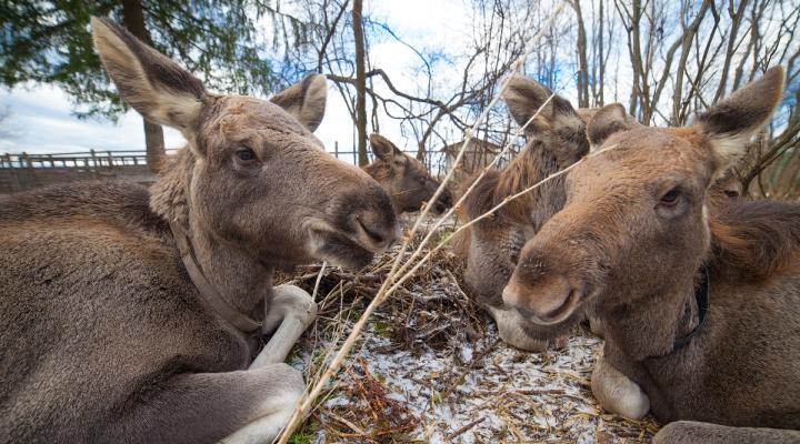 фото сумароковская ферма кострома