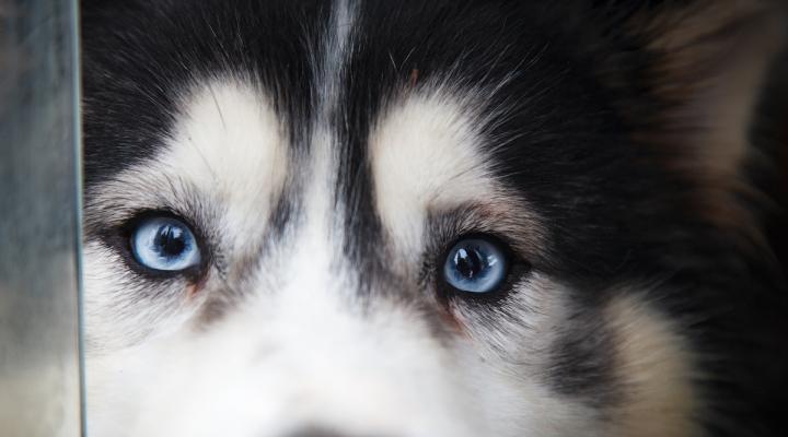 породы собак всех фото