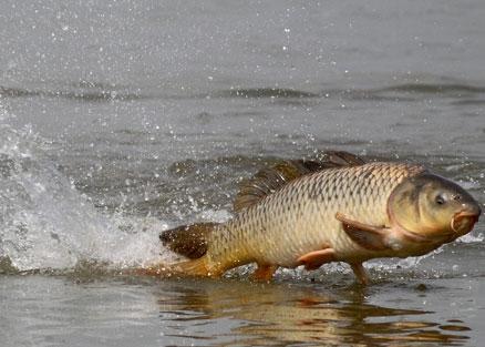 В связи с тем, что настоящая карповая рыбалка отличается тем, что её нельзя успешно провести за один день...