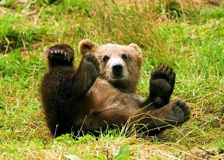 медведя угостят мёдом...