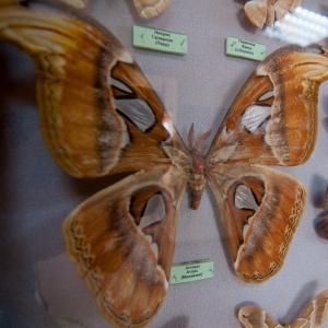 настоящие насекомые и их знакомые фото