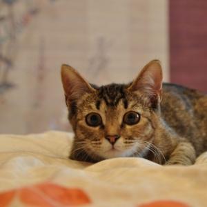 Бенгальский кот отпраздновал День святого Валентина